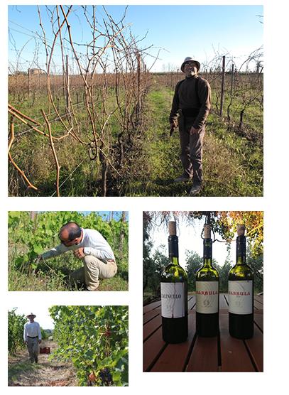 LE SENATE vingård